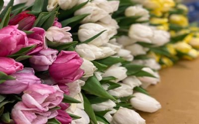 Tulips Delivered To You This Week