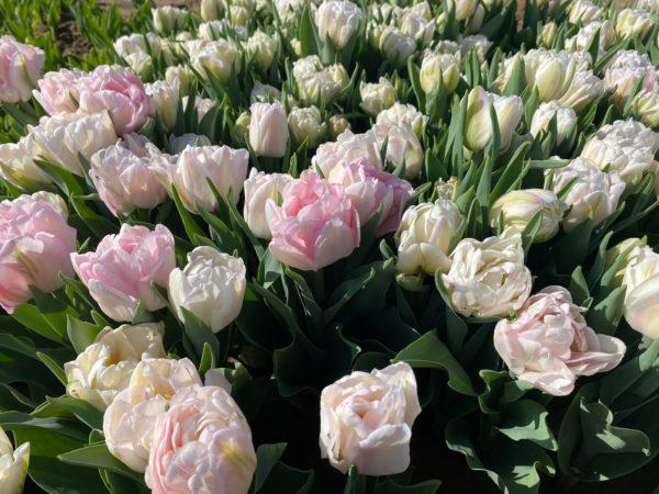 Sow n' Seeds Paducah Fresh Flowers - Evansville Fresh Flowers